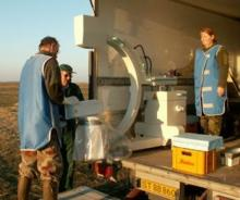 X-ray machine to monitor crippling in pink-footed geese