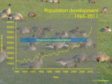 Pink-footed goose population development and target graph.
